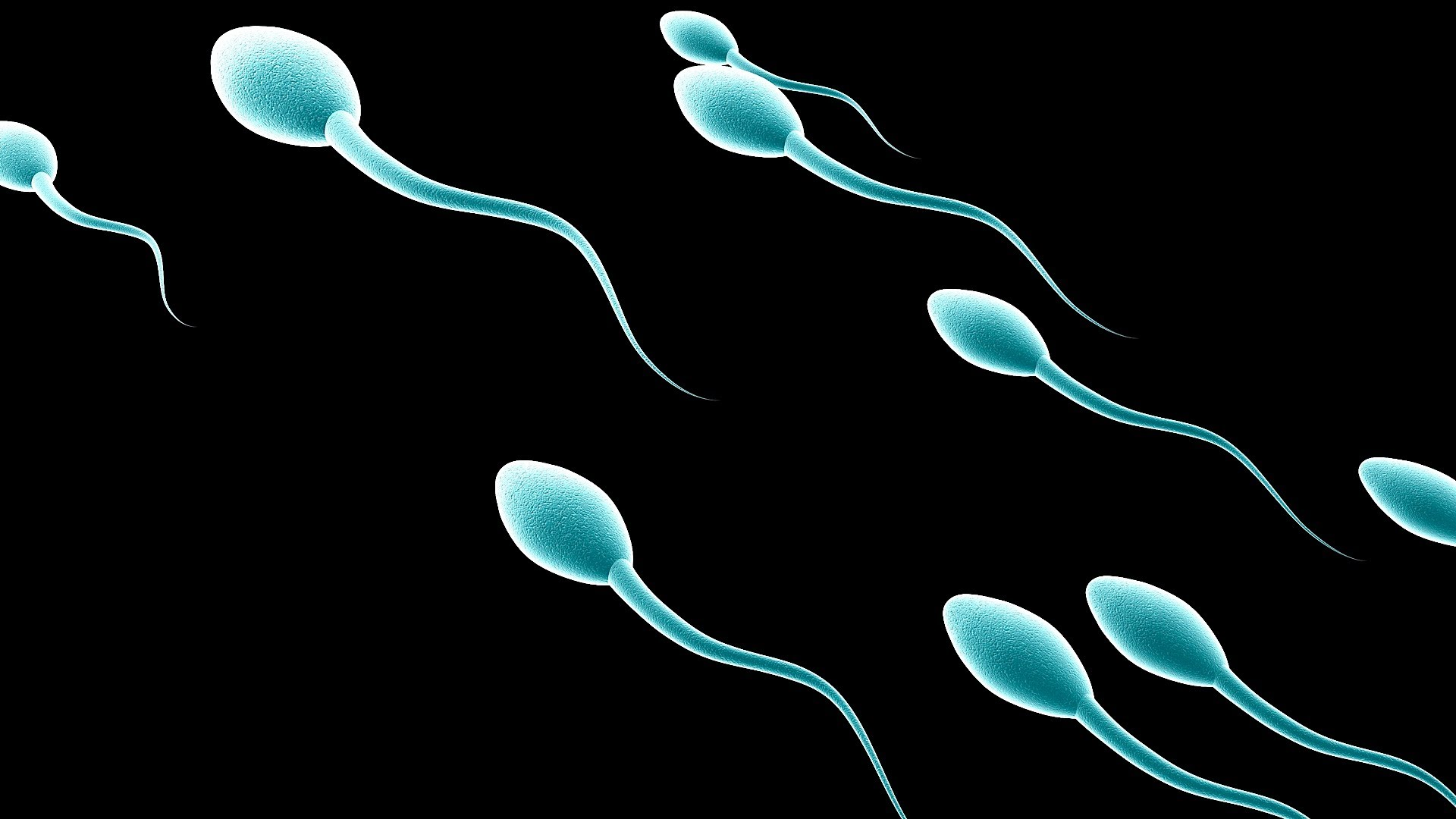 how to grow more sperm